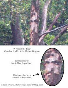 A Face in the Tree